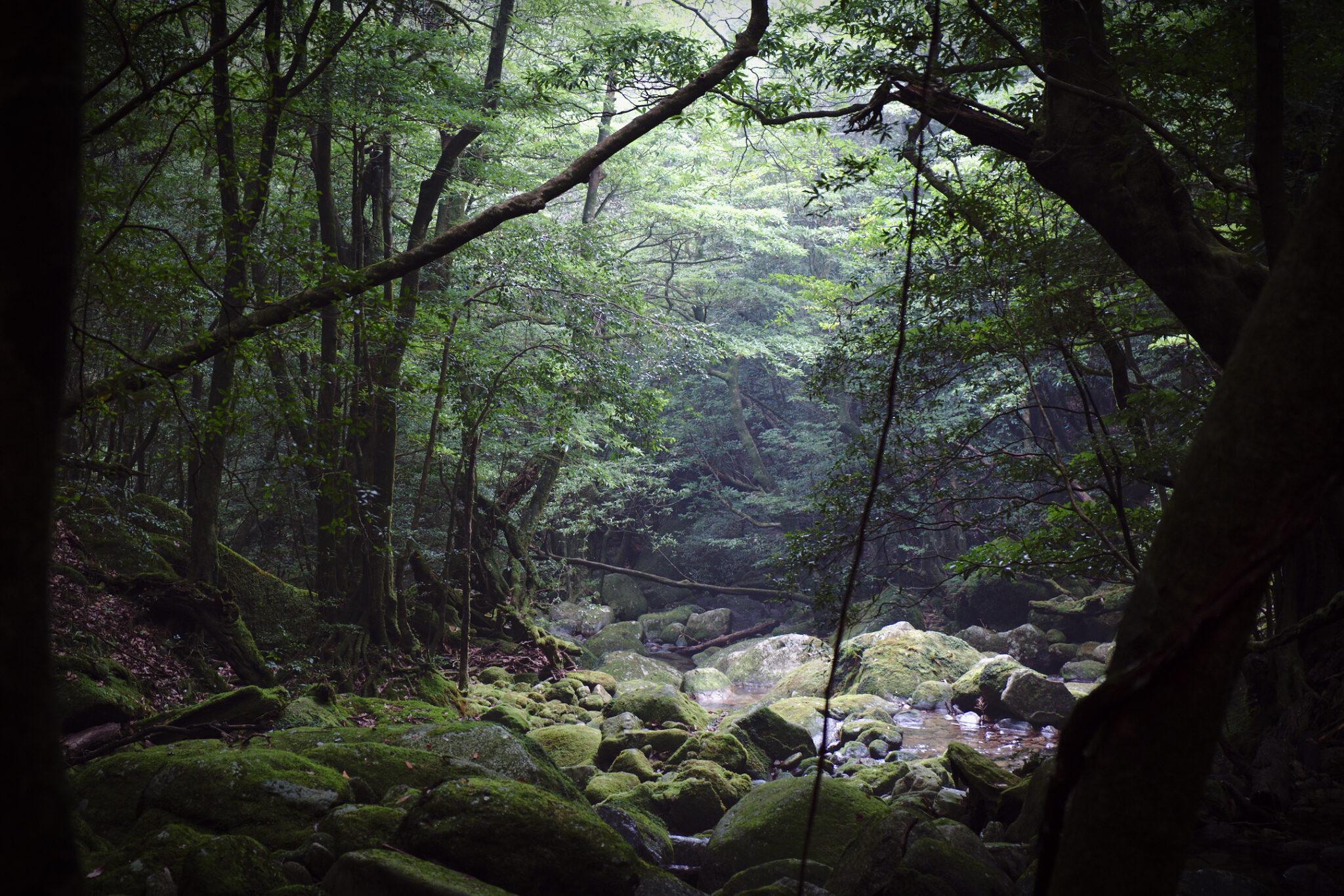Yakushima – Shiratani unsui-kyō